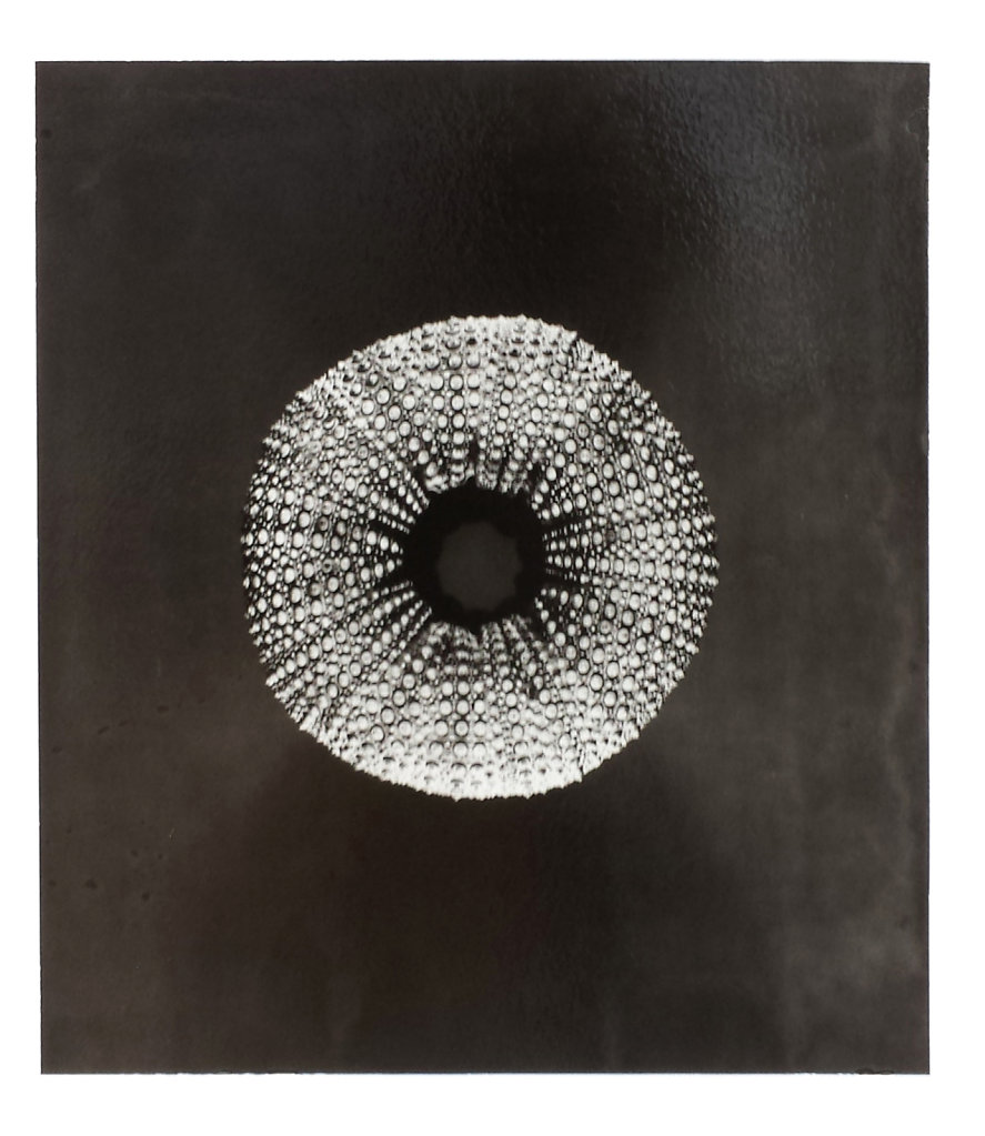 Urchin I, 2014.
