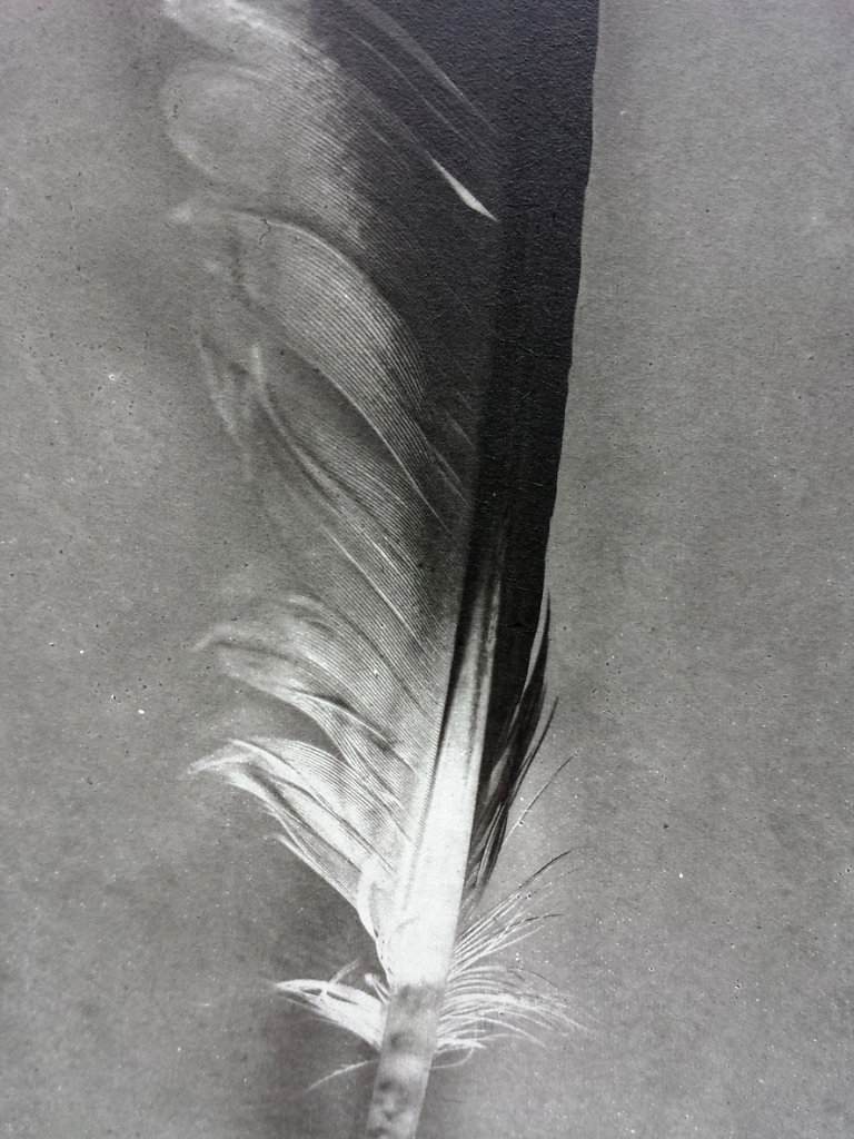 Feather (Gull - detail), 2015
