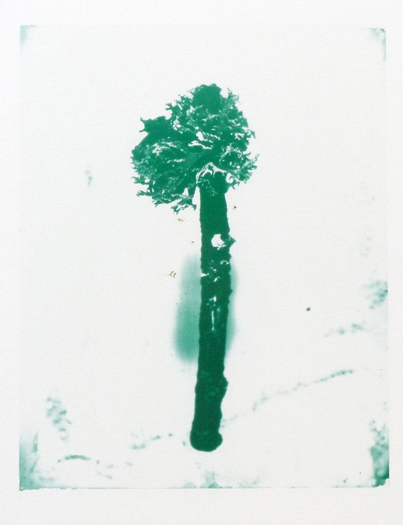 Lichen, 2015.