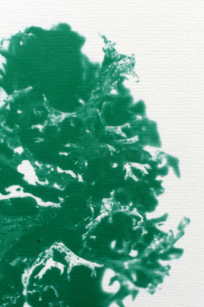 Lichen (detail), 2015.