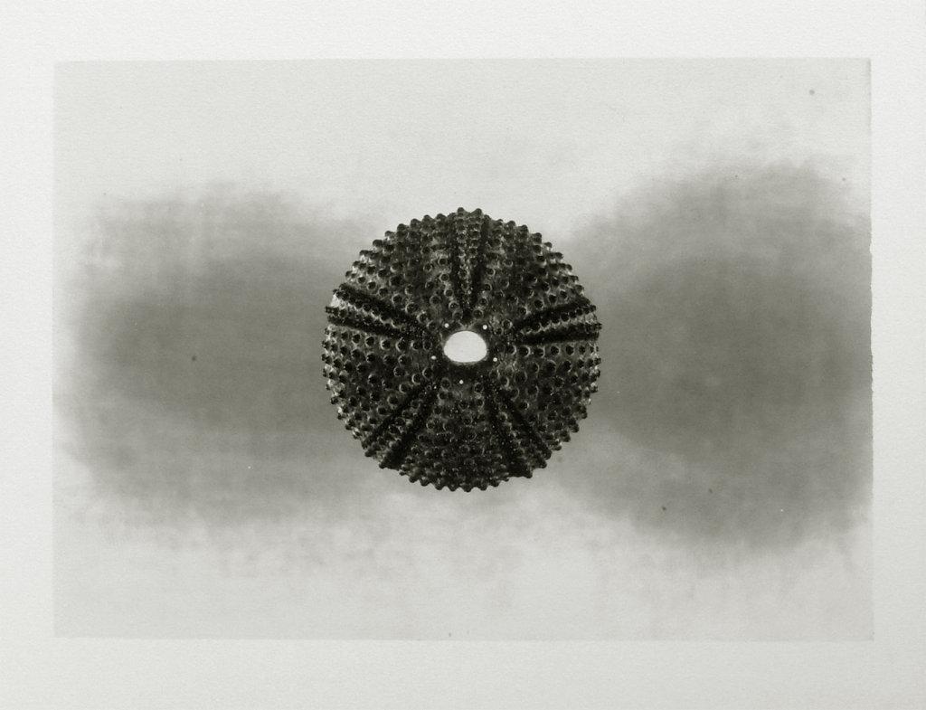 Urchin III, 2015.