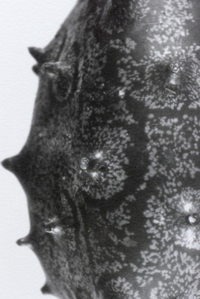 Kiweno (detail), 6.