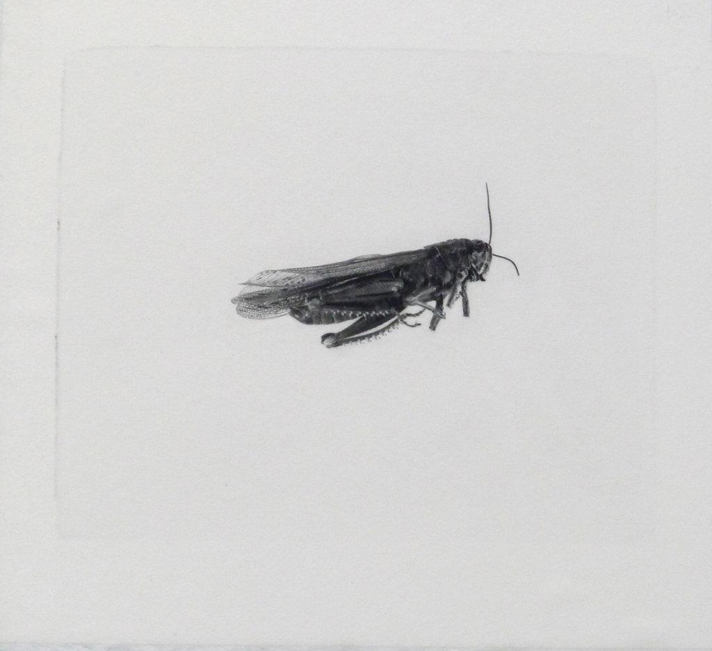 Locust, 2016.