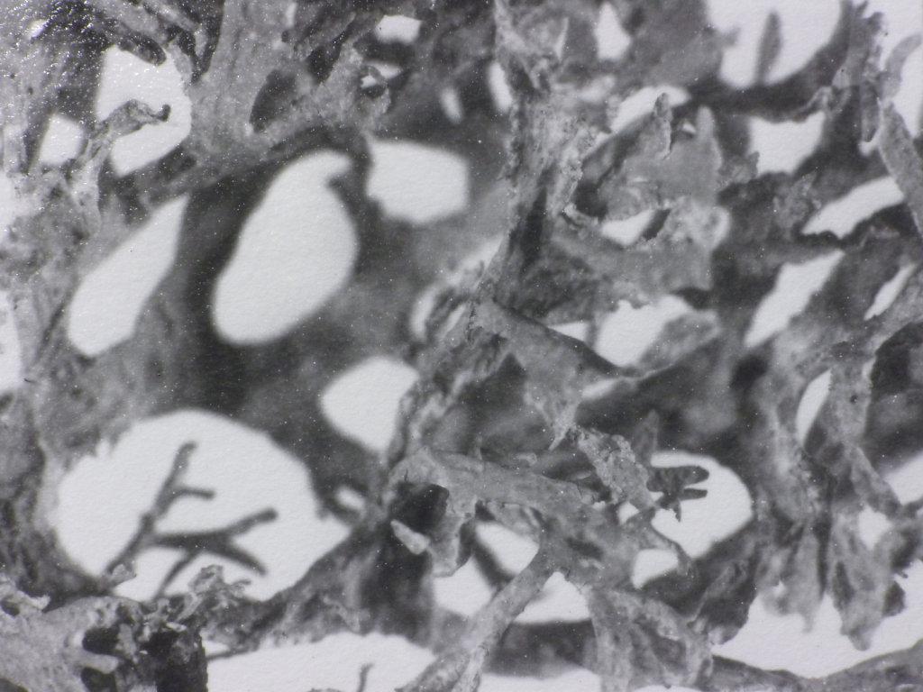 Lichen II (detail), 2016.